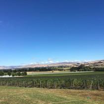 ニュージーランド コヤマ・ワインズ