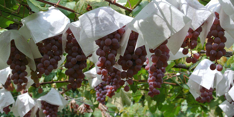 白百合醸造「秋の収穫バスツアー」のご案内