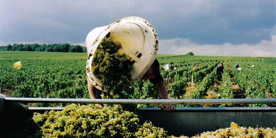 スペシャルワイン講座「誰も教えてくれなかったワインの見方」