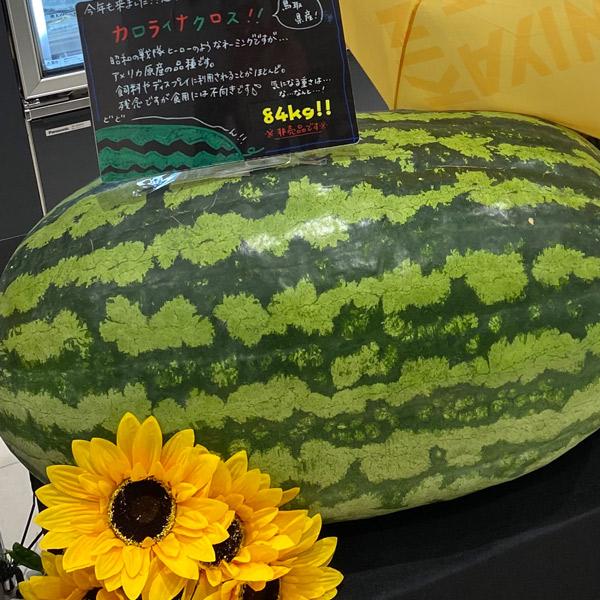Fumifumi談義~スイカ~